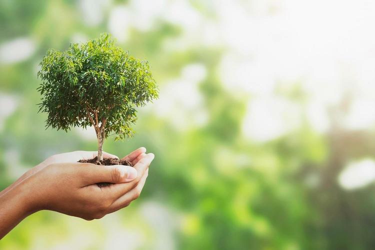 1268947-main-tenant-un-petit-arbre-gratuit-photo.jpg